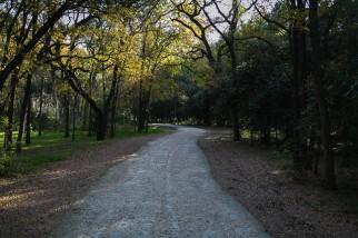 Runners enjoying the trail at Brackenridge Park in San Antonio, Texas.